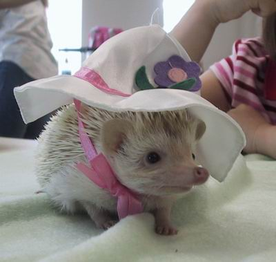 cute_hedgehog_4.jpg